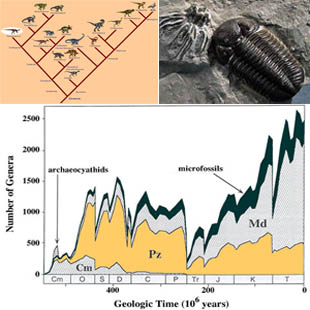collage of three images: an evolutionary tree of dinosaurs, a fossil trilobite, and a graph showing the history of marine animal diversity.